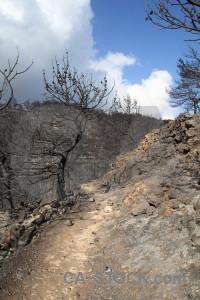 Ash montgo fire path branch burnt.