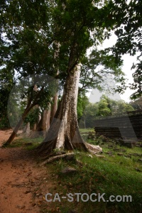 Asia angkor thom single buddhist tree.