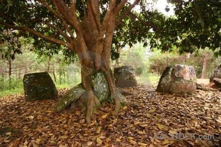Asia phonsavan megalithic lichen southeast.