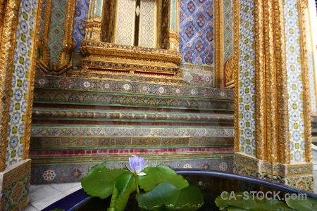 Asia thailand gold grand palace water lily.