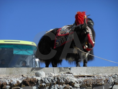 Asia tibet bus altitude plateau.