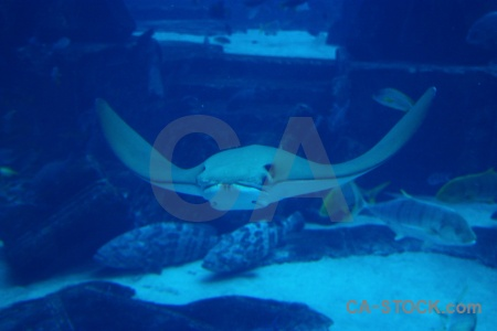 Asia underwater cyan dubai uae.