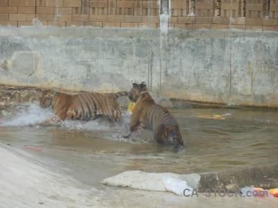 Asia water animal wat pa luang ta bua yansampanno pha.