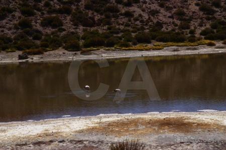 Atacama desert flamingo andes water el tatio.