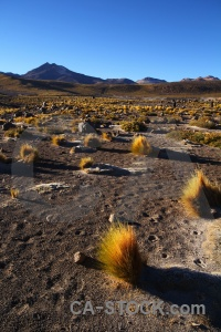 Atacama desert grass mountain chile sand.
