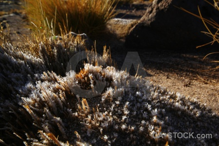 Atacama desert grass south america bush chile.