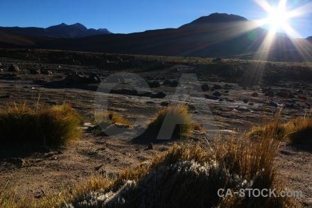 Atacama desert landscape bush mountain grass.