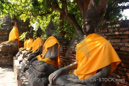 Ayutthaya southeast asia tree thailand wat yai chai mongkhon.
