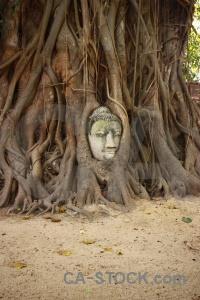 Ayutthaya wat mahathat southeast asia buddhist head.