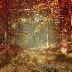 Backgrounds brown fantasy red orange.