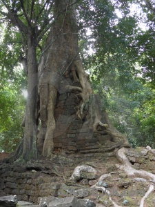 Baphuon khmer temple siem reap root.