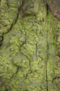 Bark green wood texture.
