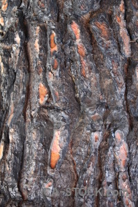Bark javea europe burnt texture.
