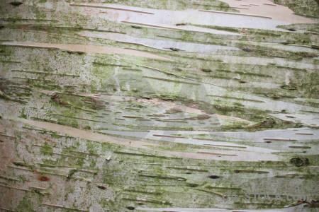 Bark texture green wood.