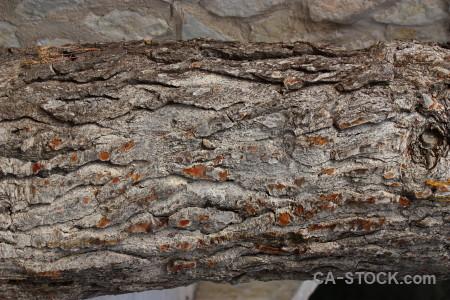 Bark texture wood.