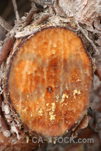Bark texture wood orange.