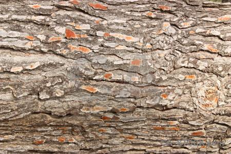 Bark wood texture.