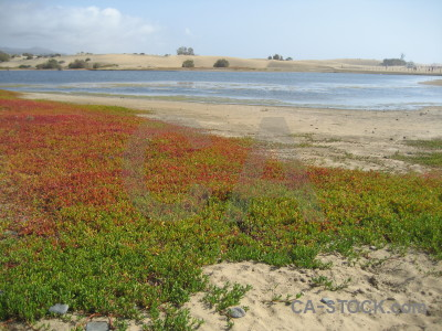 Beach coast sea landscape plant.