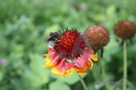 Bee flower animal insect plant.