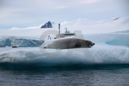 Bellingshausen sea crabeater snowcap antarctica cruise cloud.