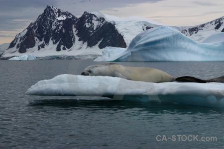 Bellingshausen sea iceberg antarctica cloud snowcap.