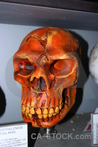 Benidoleig javea spain skull europe.