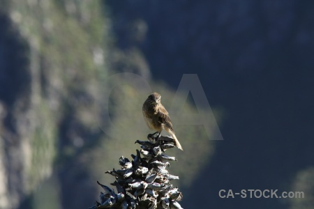 Bird andes peru leaf colca valley.