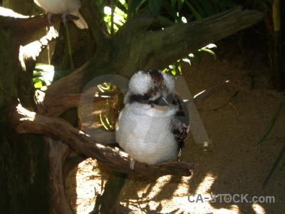 Bird animal.