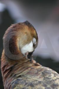 Bird animal aquatic.
