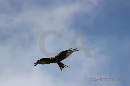 Bird animal flying sky.