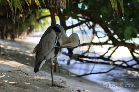 Bird animal heron.