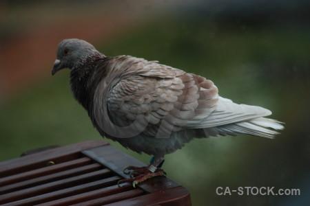 Bird animal pigeon dove green.