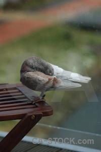 Bird animal pigeon green dove.