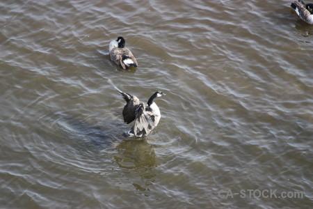 Bird animal pond water aquatic.