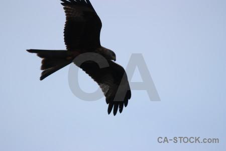 Bird animal sky flying.