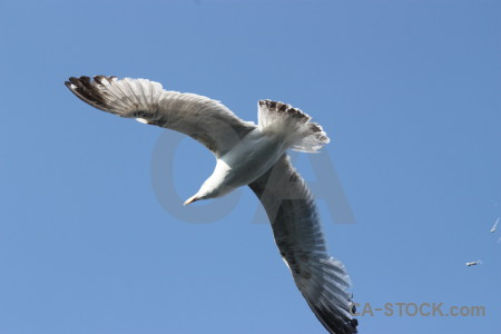 Bird animal sky seagull flying.