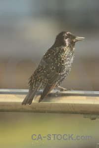 Bird animal starling.