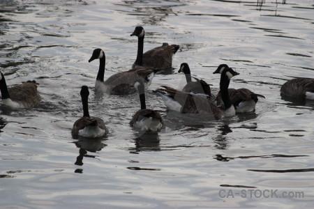 Bird animal water aquatic pond.