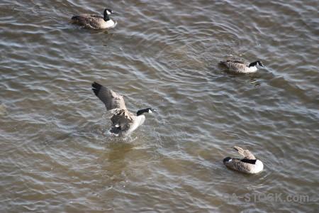 Bird animal water pond aquatic.