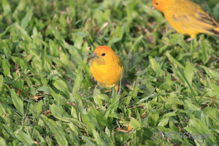 Bird animal yellow green orange.