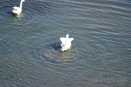 Bird aquatic animal pond water.