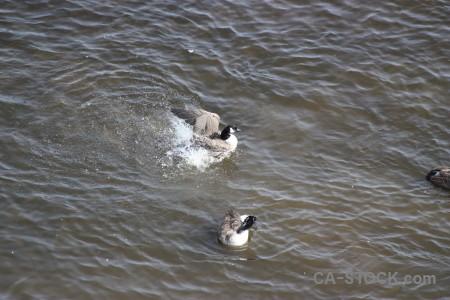 Bird aquatic animal water pond.