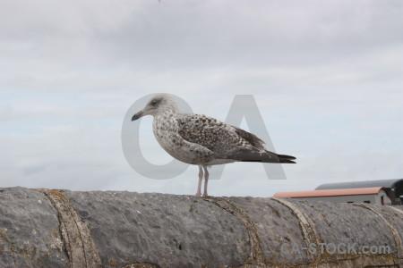 Bird aquatic animal white.