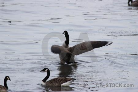 Bird aquatic pond water animal.