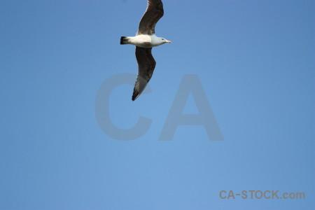 Bird blue animal flying sky.