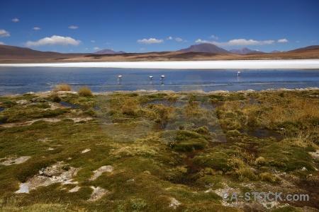 Bird bolivia grass sky laguna canapa.