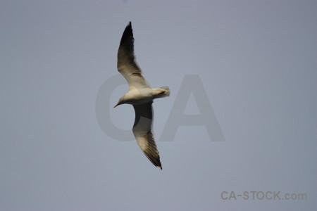 Bird flying animal seagull sky.