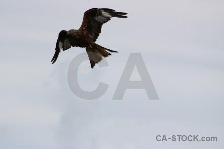 Bird flying animal sky.