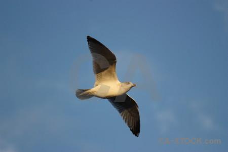 Bird flying animal sky seagull.