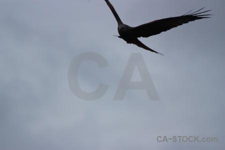 Bird flying sky animal.
